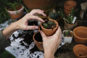 Comment bien entretenir son jardin ?