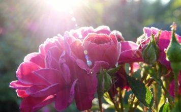Les fleurs indispensables à un beau jardin !