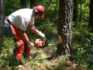 homme, tient, scie à chaîne, forêt