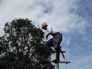 travail travail arbre la nature ciel vent statue vert jardin Japon Coupe en plein air ouvrier Tokyo Japonais jardinage cisailles garniture jardinier taille Pruneau prune Atmosphère de la terre