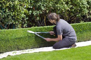 Topiaire Boîte De Couverture, Cisailles, Jardinier