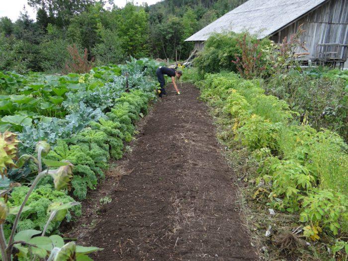 Potager traditionnel dans jardin espacé